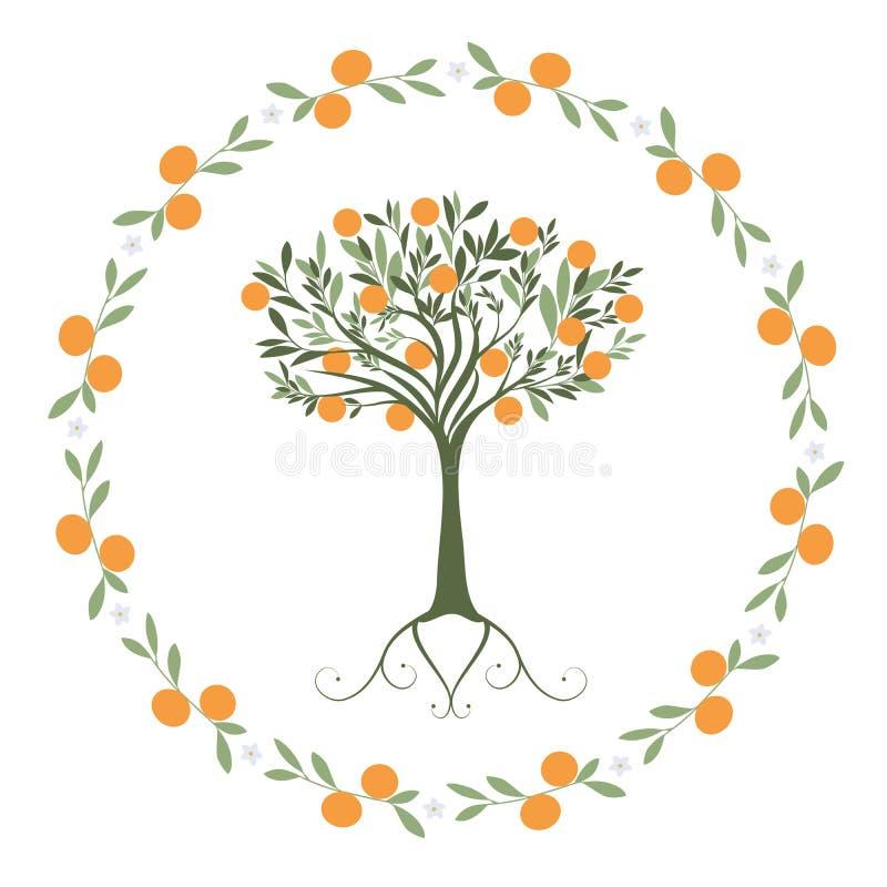 Girlande von Blättern, von Orangen und von orange Blüten mit Orangenbaum nach innen vektor abbildung