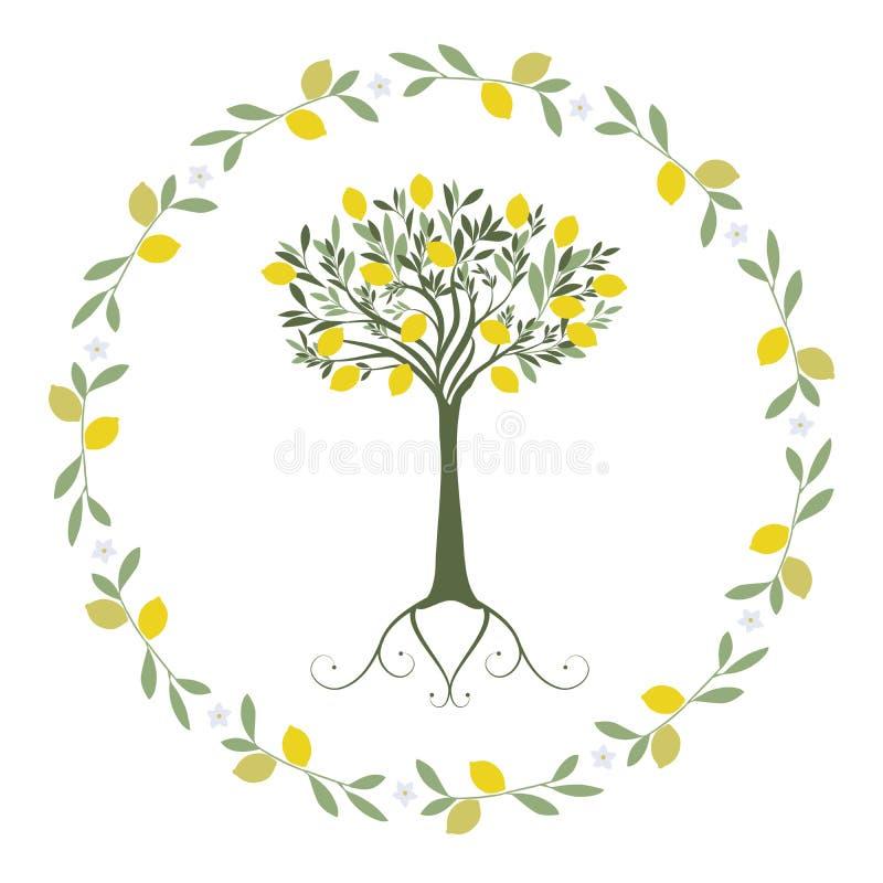 Girlande von Blättern, von Zitrone und von orange Blüten mit Zitronenbaum nach innen lizenzfreie abbildung