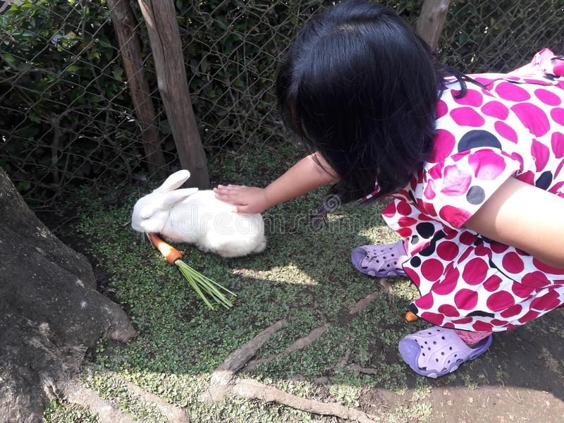Girld with Rabbit. The First time girl nteraction with pet stock photos