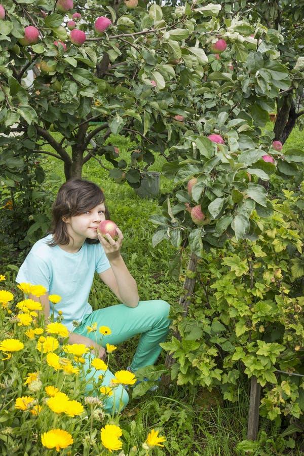 Girlie inhale l'arome d'une pomme, se reposant dans le jardin photos stock