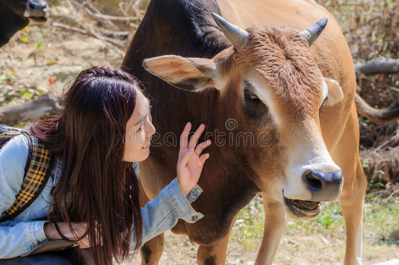 Girls and cattle royalty free stock image