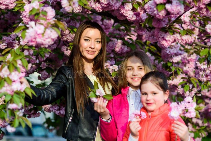 Girls cherry flower background. Spring vacation. Family near tender bloom sunny day. Sakura flower concept. Park and. Garden. Mom and girl little kids sisters stock images