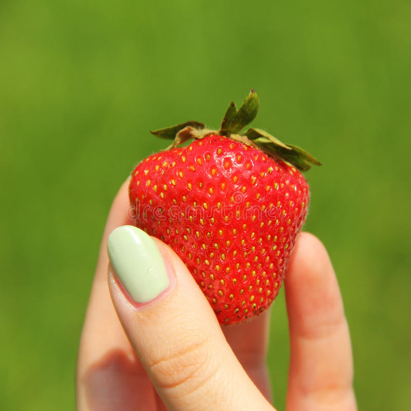 Girls fingers holding strawberry. Closeup of a teenage girls fingers, holding a red ripe strawberry stock images