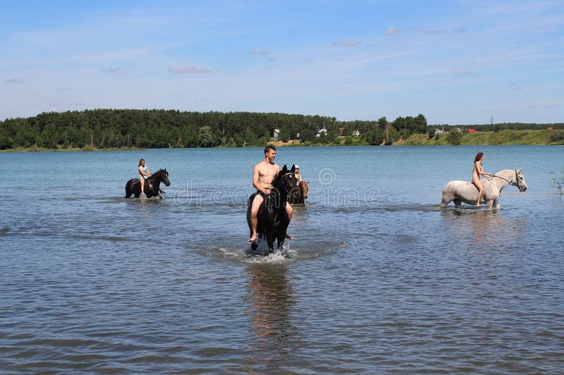 Girls and a guy on horseback swimming in the lake. Equestrian Sports Club brought horses to bathe in the lake. Russia. Moscow region. Schelkovsky district royalty free stock images