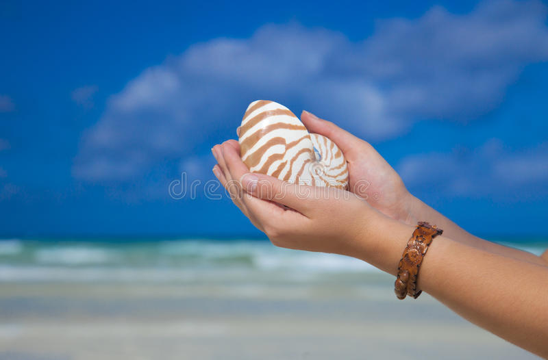 Girls Hands Holding Nautilus Shell Against Sea Stock Image