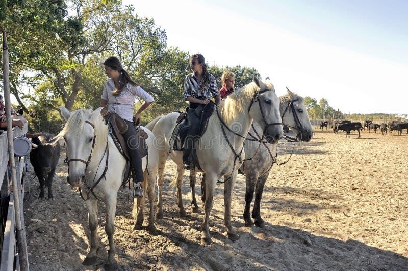 Girls herdsmen in the French Camargue region stock photos