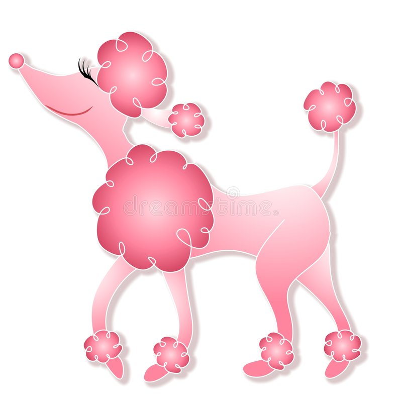 girly ρόδινο poodle περπάτημα