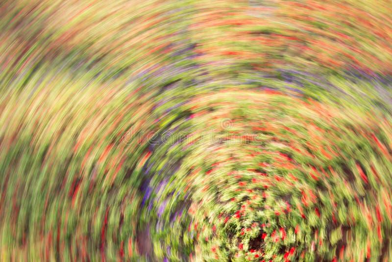 Giro de Defocus borroso de la flor con una falta de definición radial colorida fotografía de archivo