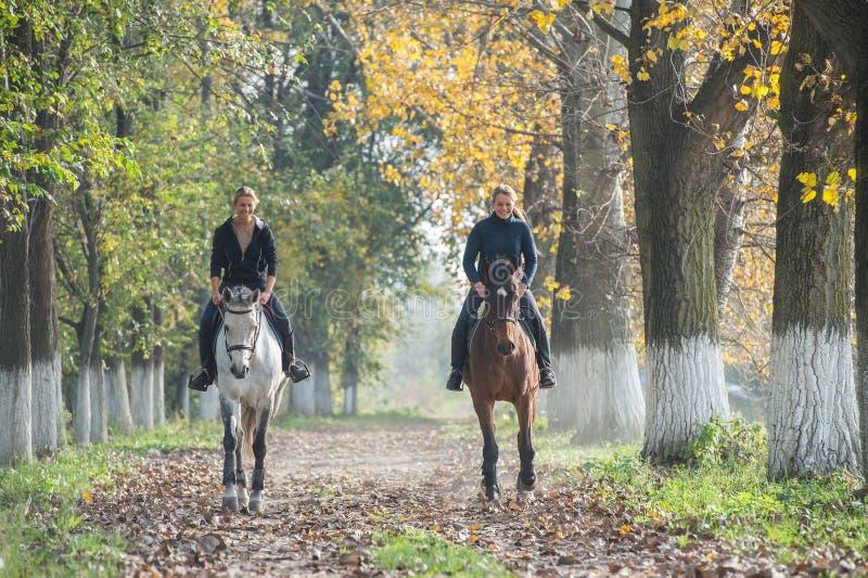 Giro del cavallo fotografia stock libera da diritti