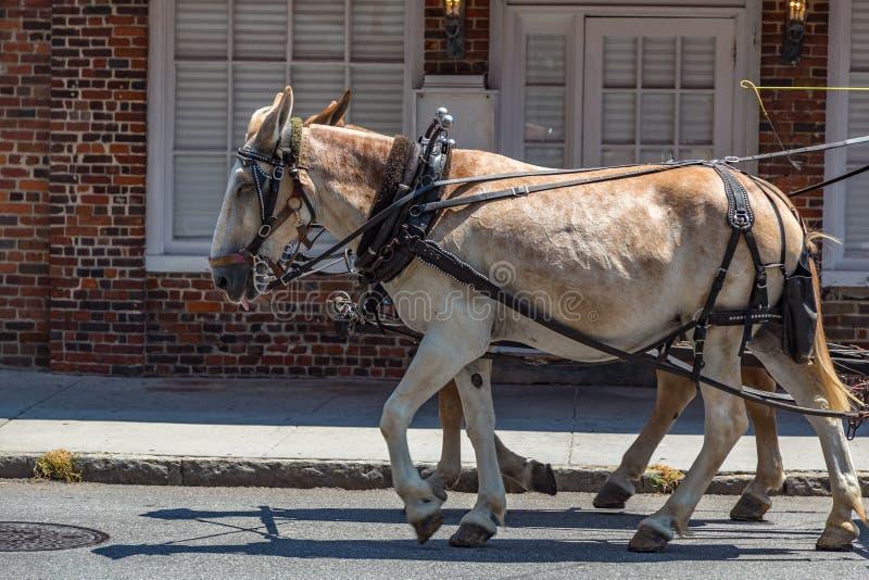 Giro del trasporto a Charleston fotografie stock libere da diritti