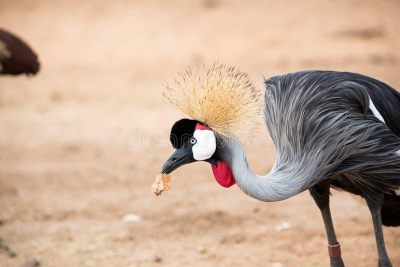 Giro di mattina a Ramat Gan Safari Park fotografia stock
