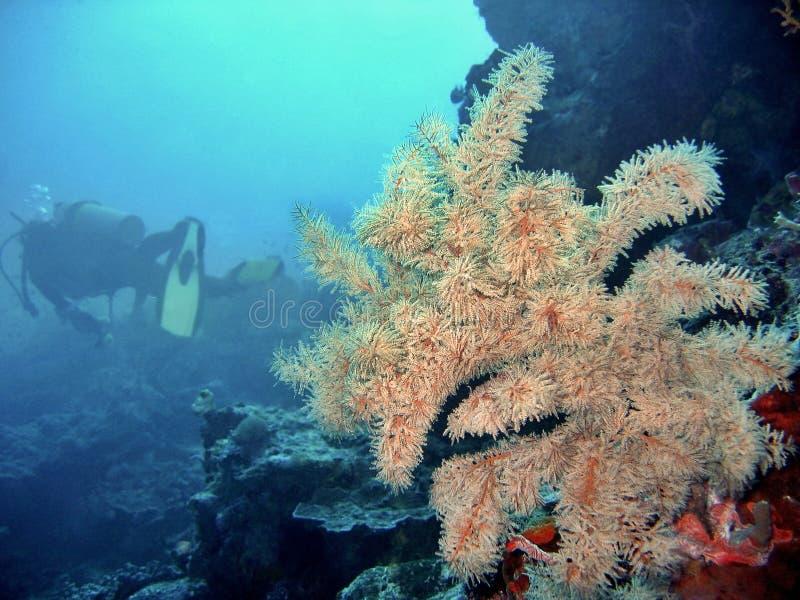 Giro subacqueo fotografie stock