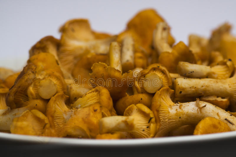 Girolles. Yellow chanterelles waiting to be cooked royalty free stock images