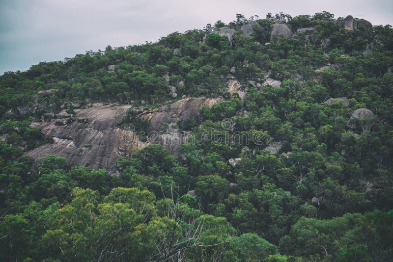 Girraween nationalpark fotografering för bildbyråer