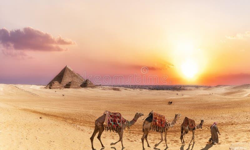 Giseh-Wüstenlandschaft mit Pyramiden und Kamelen bei Sonnenuntergang stockfotografie