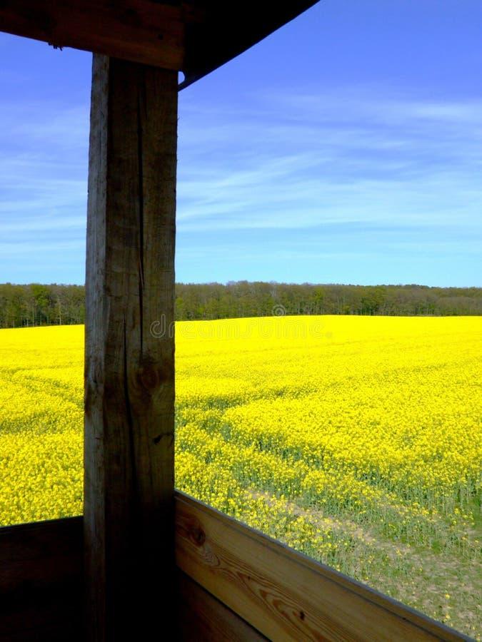 Gisement d'or de graine de colza (viol) de tour de guet photographie stock libre de droits