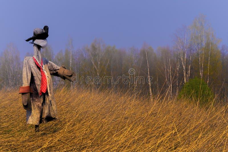Gisement d'effigie au printemps en automne de seigle non enlev? images libres de droits