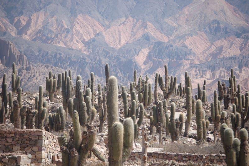 Gisement de cactus dans la zone de montagne colorée image stock