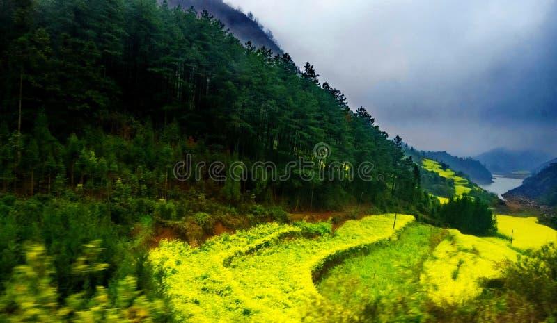 Download Gisement De Canola, Gisement De Fleur De Graine De Colza Avec La Brume Dans Luoping Image stock - Image du paysage, panorama: 87703081