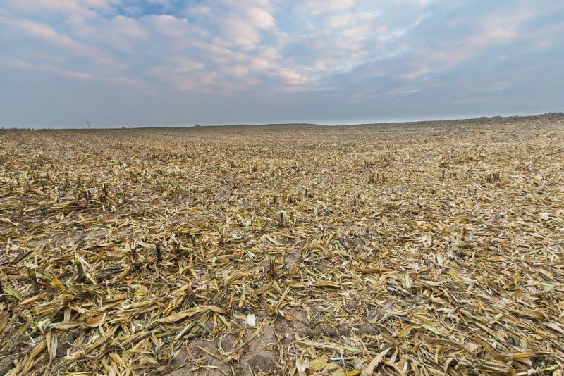 Gisement de chaume après maïs photo stock