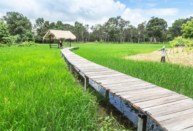Gisement de croisement de riz de vieux de courbe pont en bois en passage couvert à la vieille hutte en bambou images stock