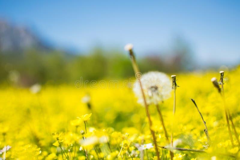 Gisement de fleur jaune lumineux photos stock