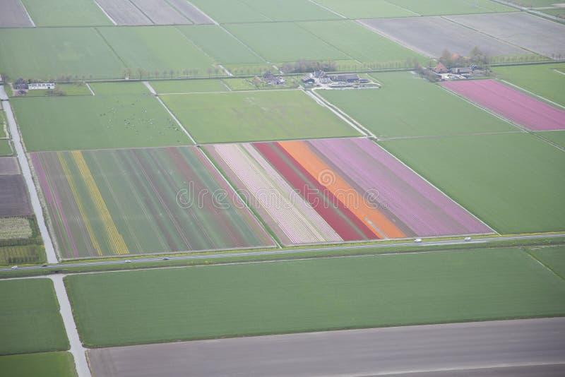 Gisement de fleur néerlandais d'en haut image stock