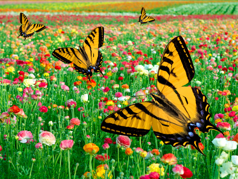 Gisement de fleur oriental de ~ de guindineau de Swallowtail de tigre photo libre de droits