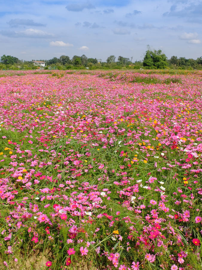 Gisement de fleurs photographie stock libre de droits
