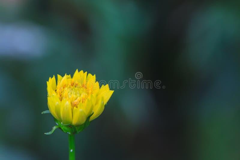 Download Gisement De Fleurs De Souci Image stock - Image du ressort, centrale: 56489431