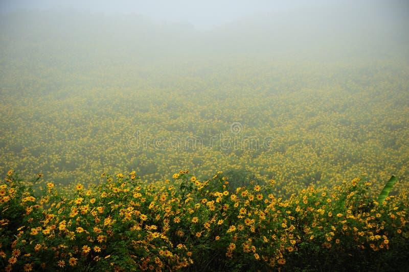 Gisement de fleurs sur le regain dans le temps de matin image libre de droits
