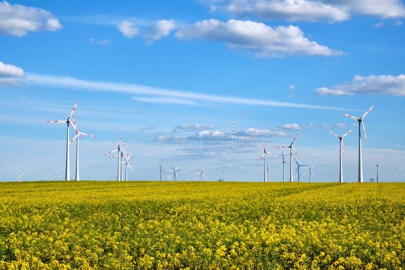 Gisement de floraison de canola avec des générateurs d'énergie éolienne photos stock