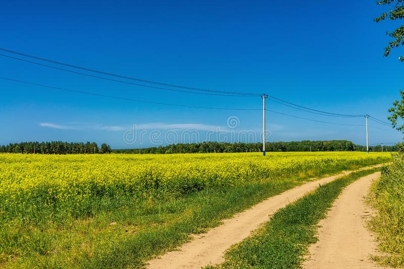 Gisement de graine de colza et route de champ contre le ciel avec des nuages un jour ensoleillé d'été Plantes oléagineuses Cultur photographie stock