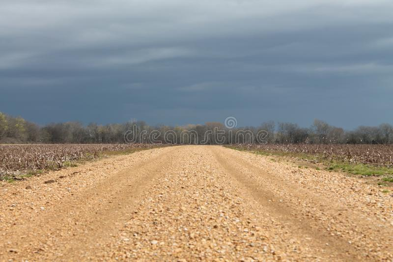 Gisement de graine de coton au Mississippi photos libres de droits