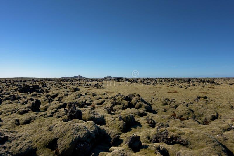 Gisement de lave de l'Islande couvert de la mousse verte photos stock