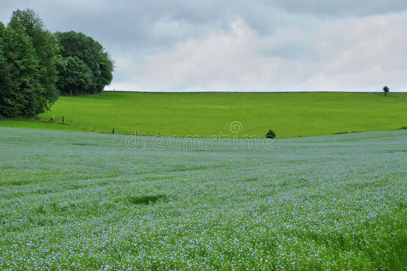 Gisement de lin dans Bois Guilbert dans Normandie images libres de droits