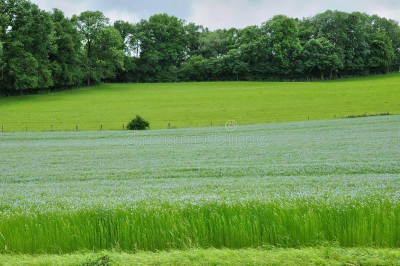 Gisement de lin dans Bois Guilbert dans Normandie image stock