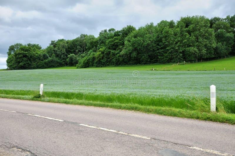 Gisement de lin dans Bois Guilbert dans Normandie photos stock