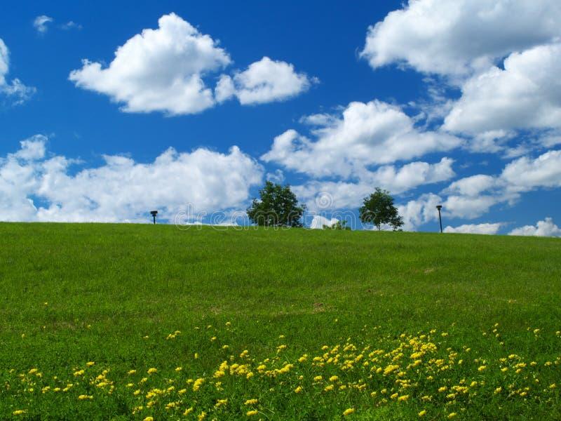 Gisement de pissenlit et ciel bleu photo libre de droits