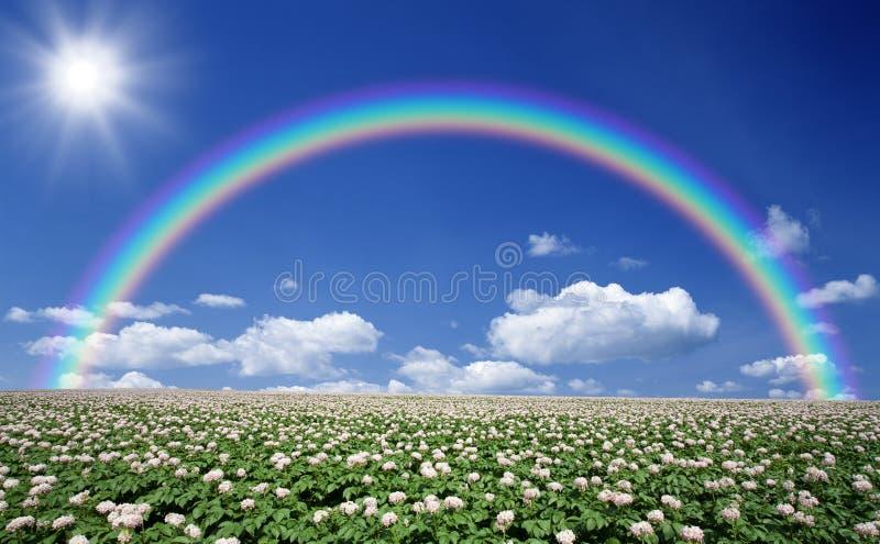 Gisement de pomme de terre avec le ciel et l'arc-en-ciel images libres de droits