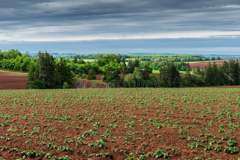 Gisement de pomme de terre dans prince rural Edward Island photo libre de droits