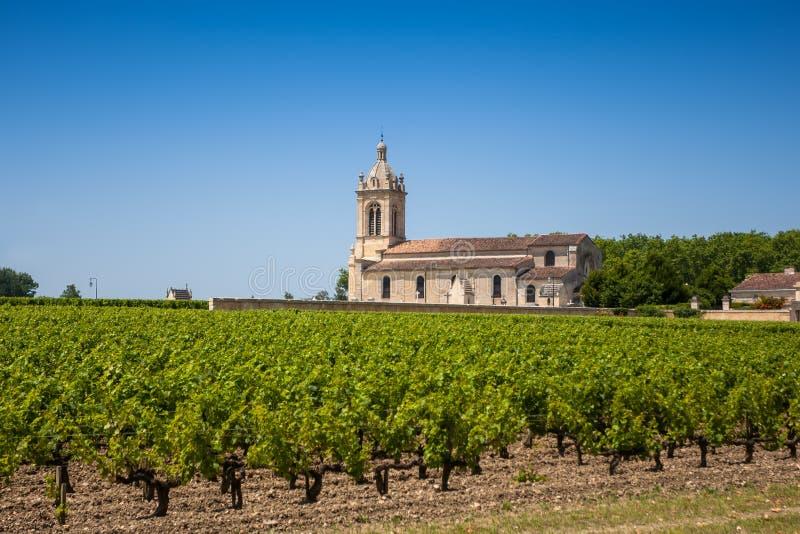 Gisement de raisin et vieille église derrière. Le paysage typique dans Bord photographie stock libre de droits