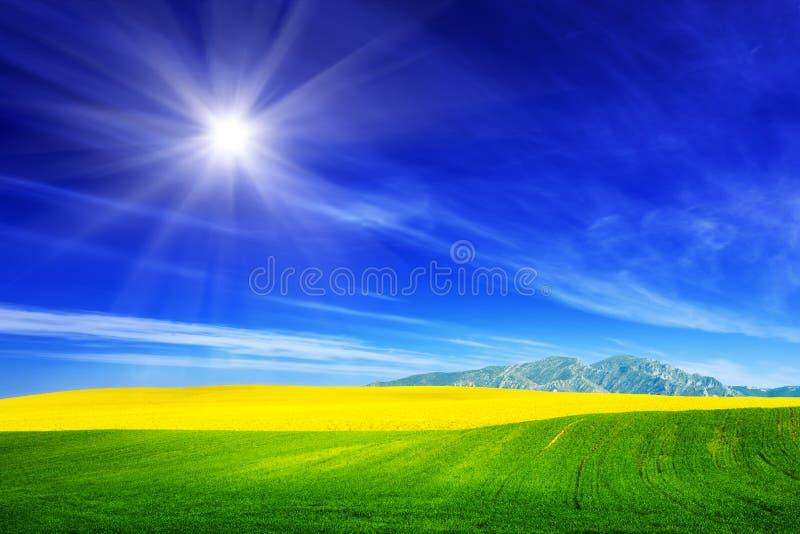 Gisement de ressort d'herbe verte et de fleurs jaunes, viol Ciel ensoleillé bleu photographie stock