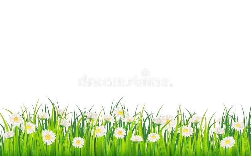 Gisement de ressort des fleurs des marguerites, de la camomille et de l'herbe juteuse verte, pré Vecteur, illustration, d'isoleme illustration de vecteur
