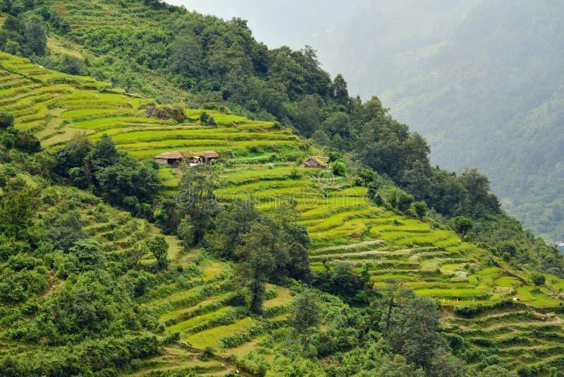 Gisement de riz au Népal photos stock