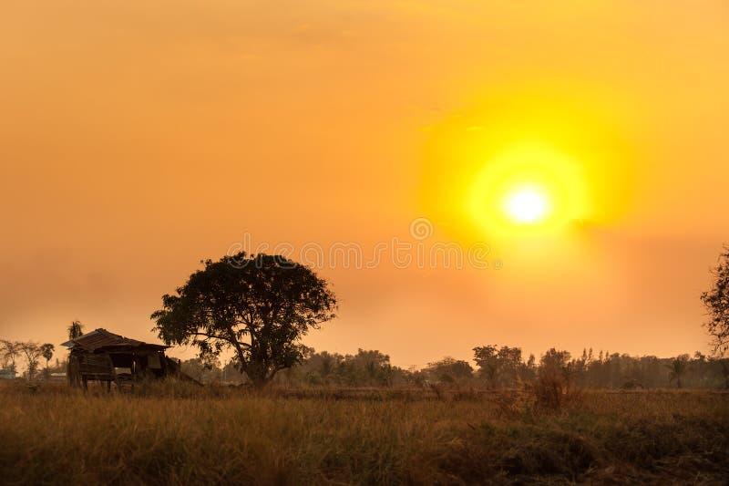 Gisement de riz avec la scène de coucher du soleil image stock