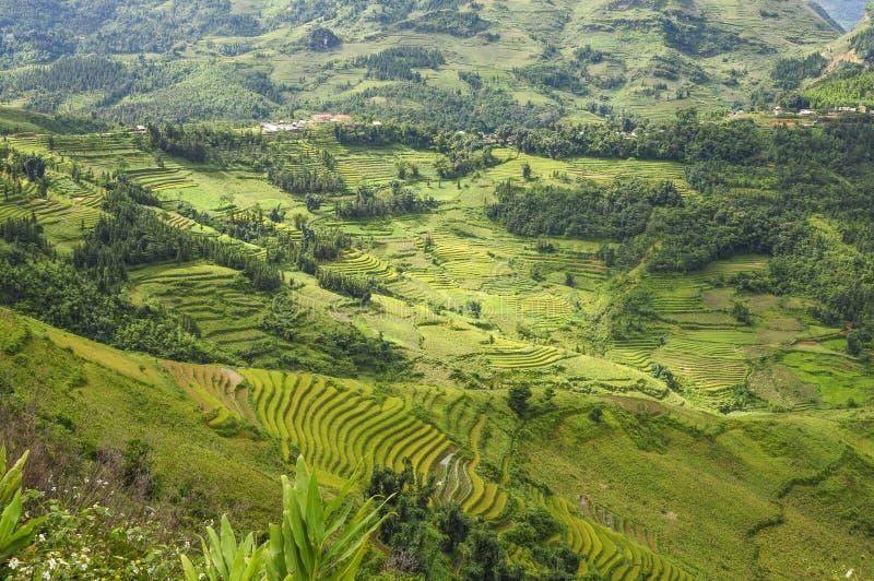 Gisement de riz dans Ha Giang photos libres de droits