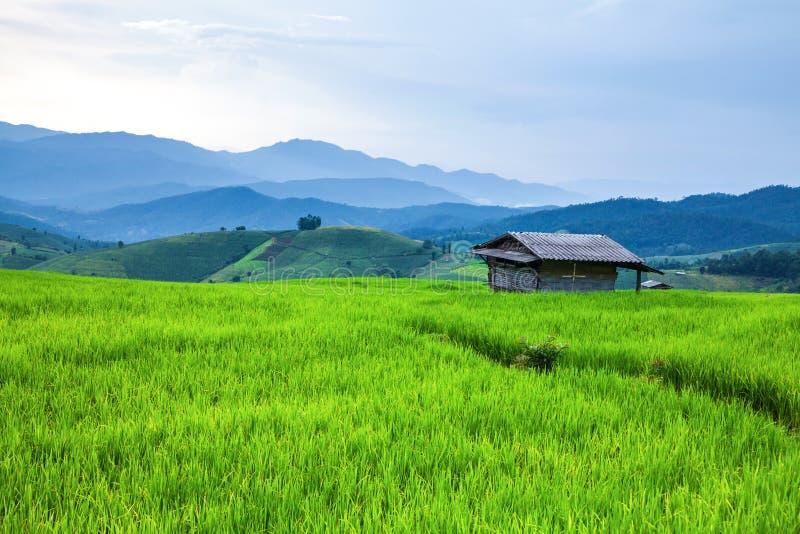 Gisement de riz de hutte et de terrasse images libres de droits