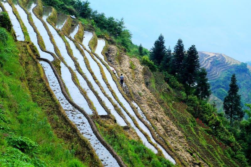 Gisement de riz de terrasse de Longji photographie stock