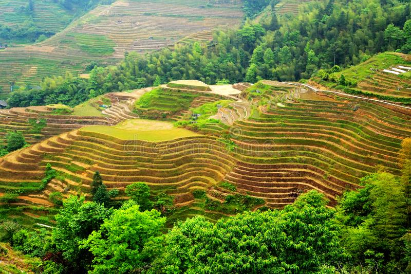 Gisement de riz de terrasse de Longji photos stock